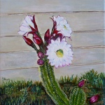 Saucer Cactus Flower