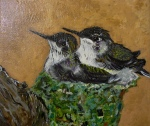 Sowell's Baby Hummingbirds
