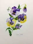 "Pansies- 11""x14"", Watercolor 2016"