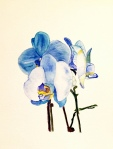 "Blue Orchid- 8""x10"", Watercolor 2017"
