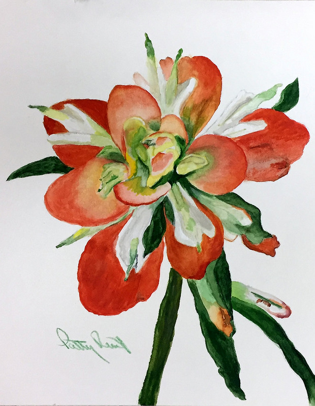 "Indian Paint Brush- 8""x10"", Watercolor 2017"